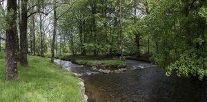rivière ruisseau arbre
